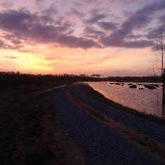 Wetland Treatment of Combined Effluent